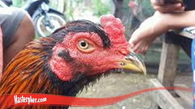 Cara Yang Benar Sembuhkan Mata Ayam S128